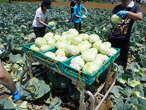 農業研修・フクフクフクリ野菜(野菜を育てるところから[農業研修])